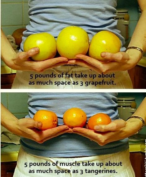 pierderea de grăsime și diferența de pierdere în greutate)