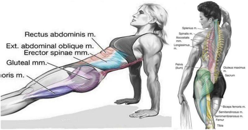 Plank invers sa-ti imbunatatesti forta in abdomen si corpul inferior