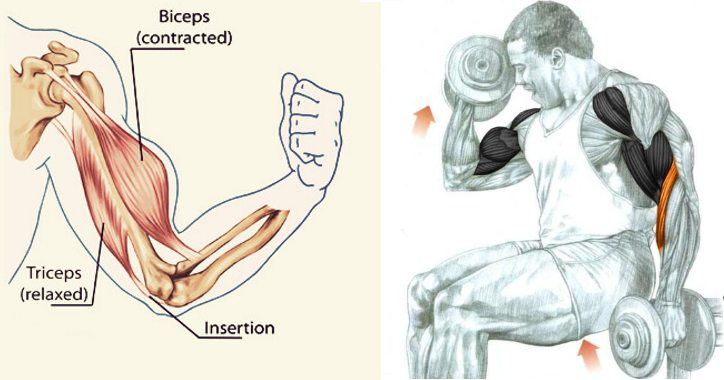 Ghidul complet pentru antrenarea bicepsului pentru a-l dezvolta la maxim