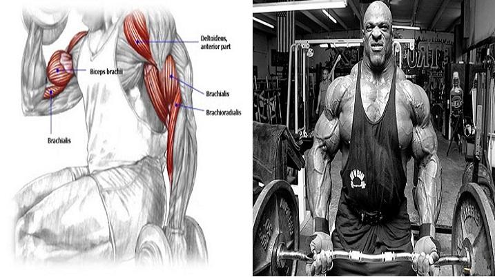 Ghid de antrenament pentru dezvoltarea maximă a bicepsului
