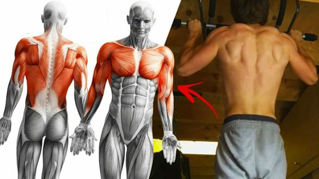 Rutina de antrenament cu tractiuni pentru creșterea masei musculare