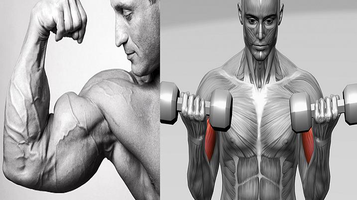 Sfaturi pentru a va dezvolta bicepsul