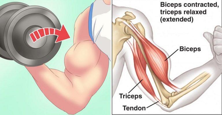 De ce nu obtineti un biceps mai mare - acestea sunt 3 motive esențiale