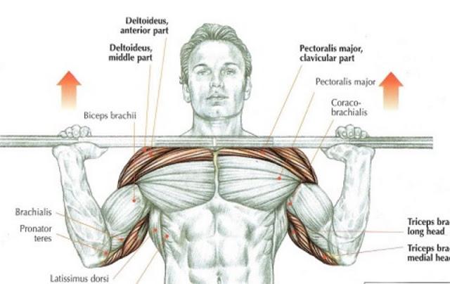 Acest exercițiu uitat este probabil cel mai bun exercițiu de construire a masei musculare pentru corpul superior