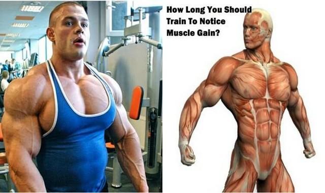 Cât timp trebuie să va antrenati pentru a observa creșterea masei musculare?