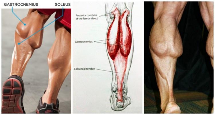 Cele mai bune sfaturi pentru a construi gambe masive!